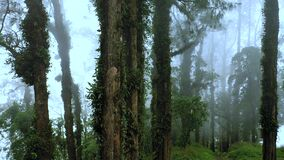 Magical forest on a volcano in fog