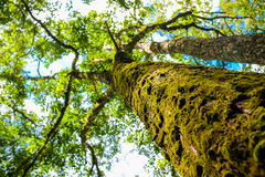 Magical fresh green forest  big  tree Stock Photo