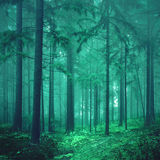 Magical green colored foggy fairytale forest Stock Photo