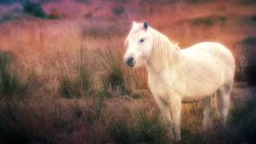 Magical Horse In A Dream. Glowing white horse in fantasy world stock video footage