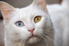 magical katt Royaltyfri Foto