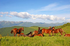 A magical landscape with herd of horses on a background of mount Stock Image