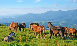 A magical landscape with herd of horses on a background of mount Royalty Free Stock Photography