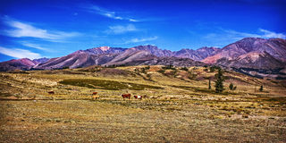 The magical landscape of the Kuray steppe. stock images