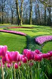 Magical landscape with tulips in the royal park of flowers in Koykenhof, Netherlands, Europe.  royalty free stock photography