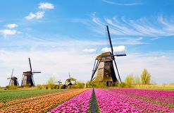 A magical landscape of tulips and windmills in the Netherlands. Relaxation, meditation, anti-stress - concept stock photography