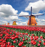 A magical landscape of tulips and windmills in the Netherlands. Stock Photo