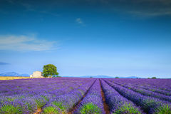 Magical lavender fields in Provence region, Valensole, France, Europe Royalty Free Stock Images