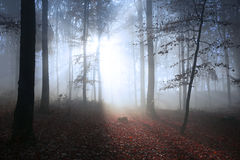 Magical light in foggy forest Royalty Free Stock Photos
