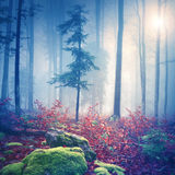Magical light in foggy forest with sun Stock Photography
