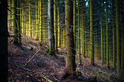 Magical light in the forest Royalty Free Stock Images