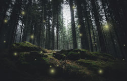 Magical lights in pine tree forest Royalty Free Stock Photos