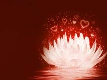 Magical lotus flower Stock Photos