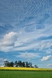 Magical moln över blomningrapeseeden sätter in Royaltyfri Foto