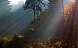 Sun rays into the forest during autumn Royalty Free Stock Image