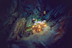 Magical mushrooms in a dark forest Royalty Free Stock Images