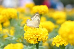 Butterfly doing on flower in the garden. Magical Nature around us. Ẹnjoy it ourself every time at every where stock photography