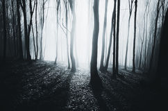 Magical night in forest Royalty Free Stock Photos
