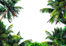 Magical palm layer royalty free stock photos