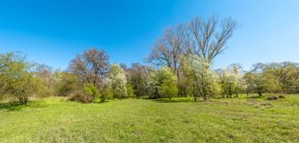 Magical panoramic view of deciduous forest in early Spring with blue sky, near Magdeburg, Germany stock images