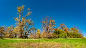 Magical panoramic view of deciduous forest in early Spring with blue sky, near Magdeburg, Germany stock photos