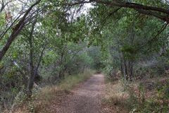 Magical path between the trees. royalty free stock photo