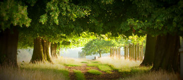 Magical pathway Royalty Free Stock Images