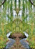 Magical place. Landscape with magical Willow and little creek Stock Photography