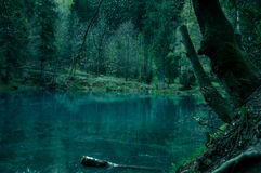 Magical pond. In mysterious forest Royalty Free Stock Images