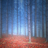 Magical red and blue colored autumn forest Royalty Free Stock Images