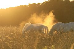 Horses in Surreal Light Stock Images