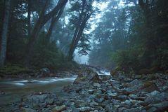 Magical scenery stream crossing the dense forest Royalty Free Stock Photography