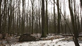 Magical scenic floodplain forest covered with snow in winter, landscape of Poodri, protected landscape area, very nice. Wetland floodplain forest covered with stock video footage