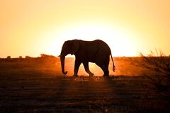 Free Magical Silhouette Elephant Royalty Free Stock Images - 215716849