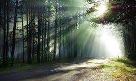 magical skog royaltyfri foto