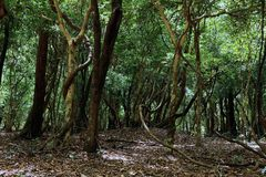 magical skog Fotografering för Bildbyråer