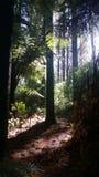 magical skog Royaltyfria Foton