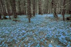 magical skog royaltyfri fotografi