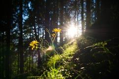 magical skog Arkivfoto