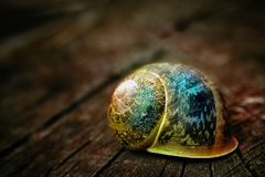 The Magical Snail. A wonderful colored snail on a tree Royalty Free Stock Images