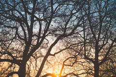 magical solnedgång Arkivfoton