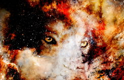 Magical space wolf, multicolor computer graphic collage Royalty Free Stock Image
