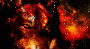 Magical space wolf, multicolor computer graphic collage. Space fire. Magical space wolf, multicolor computer graphic collage. Space fire Stock Images
