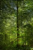 Magical Spring Forrest Royalty Free Stock Images