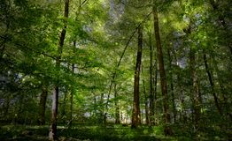 Magical Spring Forrest Stock Photos