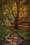 Magical stairs in autumn park. Monchique. Royalty Free Stock Image