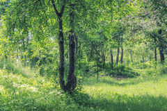 Magical summer forest. Sunny day at magical summer forest stock photo
