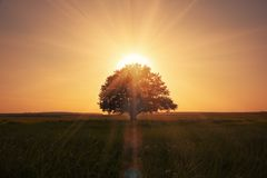 Sunrise behind tree Royalty Free Stock Photos