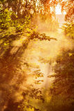 Magical sun rays Royalty Free Stock Images