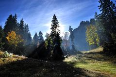 Magical sun rays in forest Stock Images